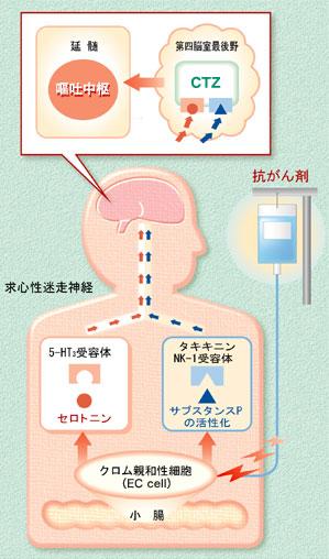 悪心・嘔吐発現のメカニズム 実は、吐くという現象が生体の中でどのように引き起こされるのかがわかっ